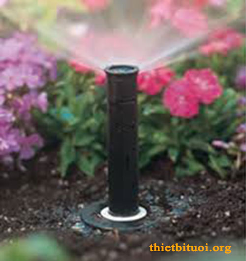 Hình ảnh vòi tưới Sprayer