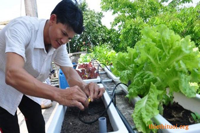 Cách trồng rau sạch tại vườn nhà kết hợp gắn béc tưới nhỏ giọt bù áp