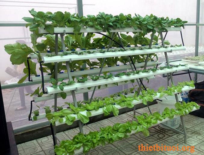 Cách trồng rau sạch tại vườn nhà kết hợp gắn béc tưới nhỏ giọt