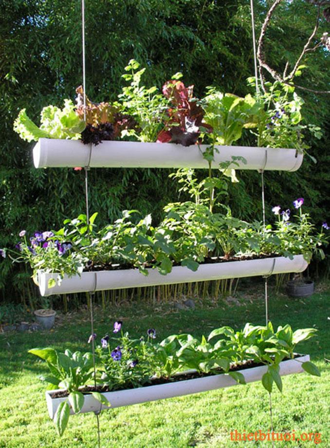 Thiết kế lắp đặt vườn rau sạch tại nhà vừa thu hoạch vừa trang trí mỹ thuật cao
